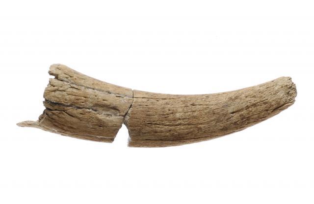Corne de chèvre